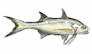 SalmonThread-fishing-tours